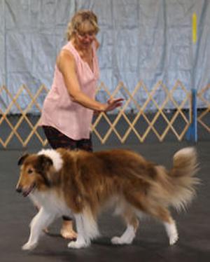 Dogscandance